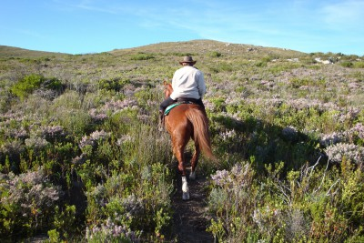 South-Africa-Tailormade-Tours-Grootbos-Forest-Lodge_Horse-Riding