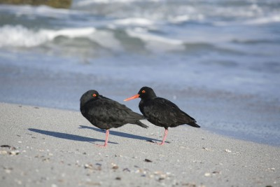 South-Africa-Tailormade-Tours-Storms-River-Mouth-Rest-Camp_Birding