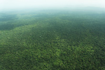 Guyana-Tailormade-Tours-Iwokrama-Rainforest-Reserve_Forest-Aerial